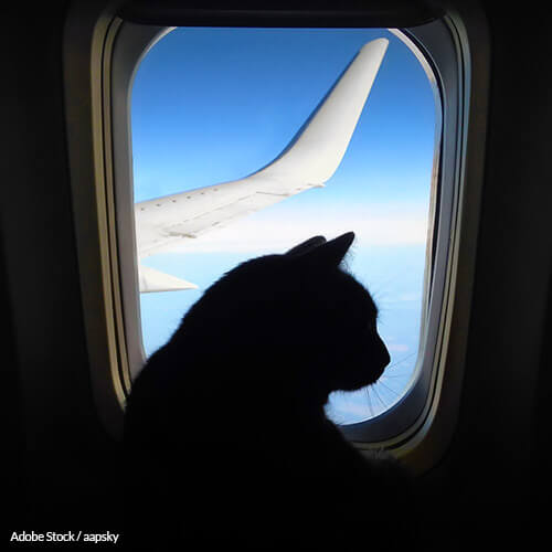 Traveling with pets shouldn't be a life-threatening ordeal!