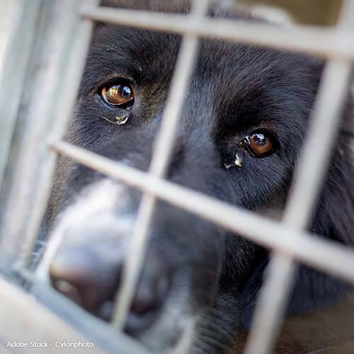 The USDA Is Allowing Abuse To Go Unchecked!