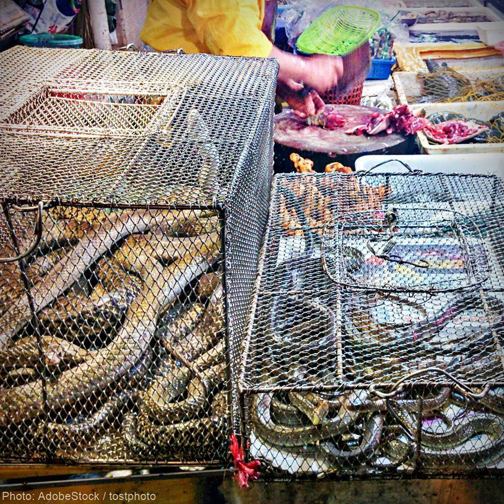 Live Animal Markets Must Be Permanently Banned To Prevent Another Pandemic