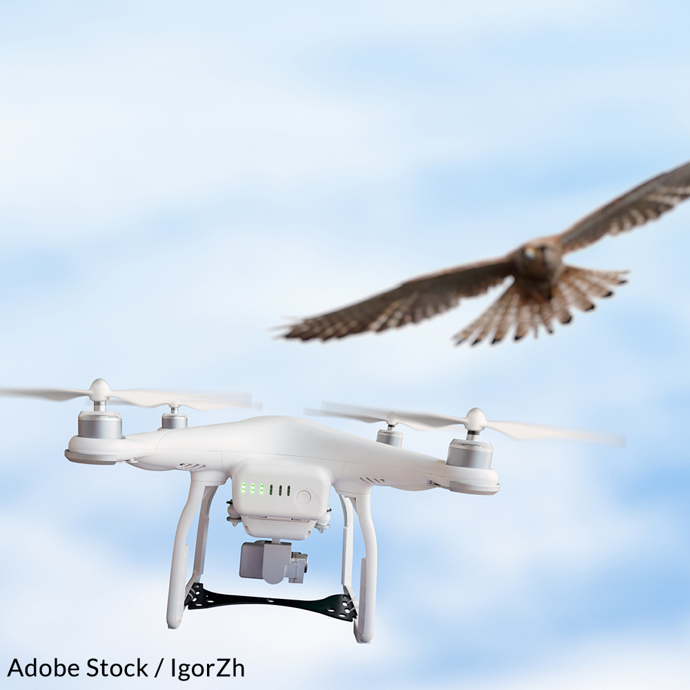 Tell the FAA to tighten its regulations and ban the use of drones over federally protected lands.