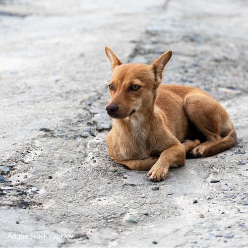 "Tell Russia: Stop Killing Homeless Animals To ""Clean Up"" World Cup Host Cities!"