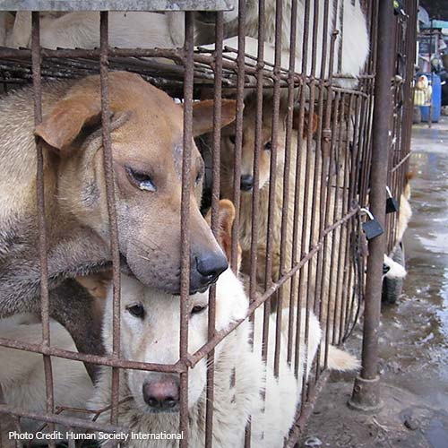 End The Yulin Dog Meat Festival For Good!