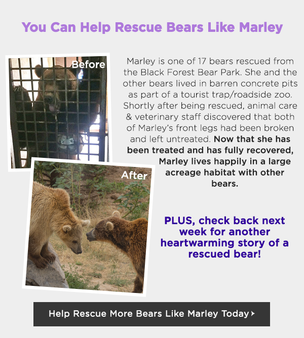 Help Rescue Bears From Abuse