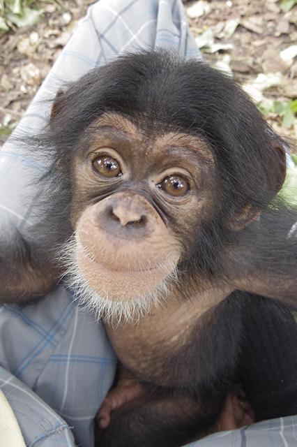 """""""chimp"""""""
