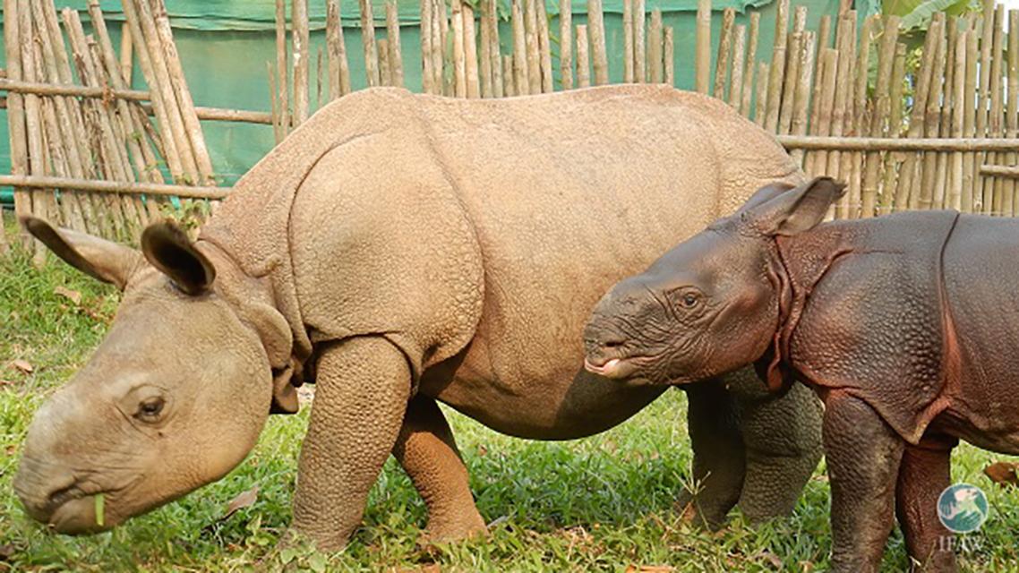 """""""rhinos"""""""