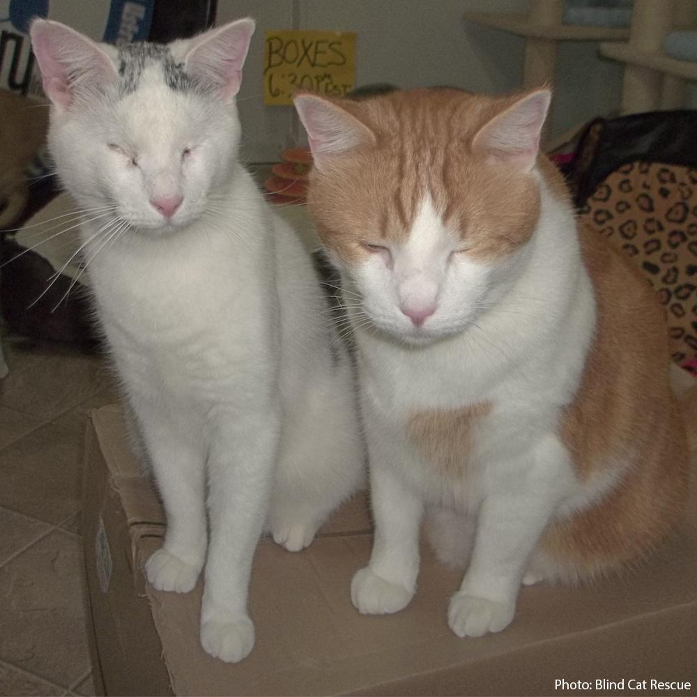 Support blind cats the animal rescue site tap reviewsmspy