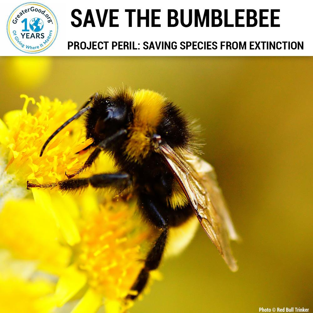 the bumblebee Specializing in pest control and bumblebee control, do it yourself pest control provides the products and expertise you need for residential and commercial control of bumble bees.