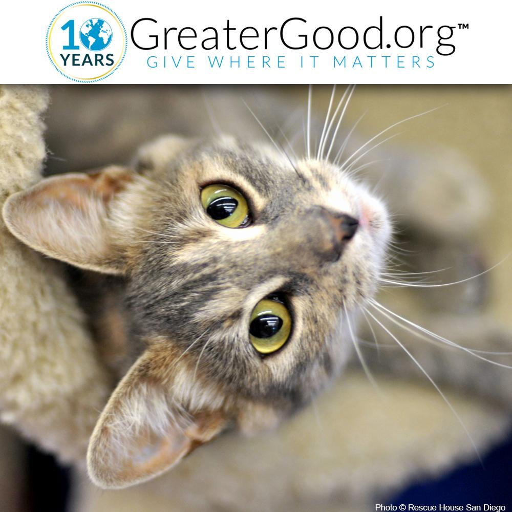 Care packages for shelter cats the animal rescue site tap reviewsmspy